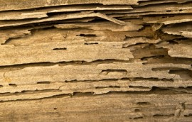 termite damage to wall